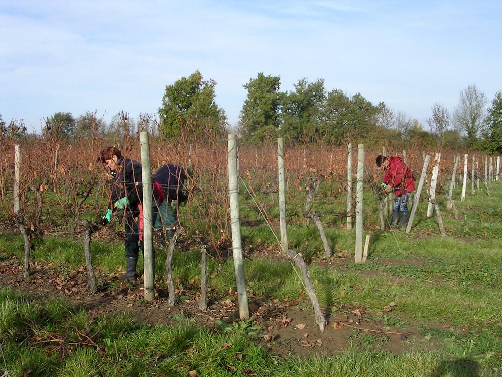 Travail de la vigne en saison