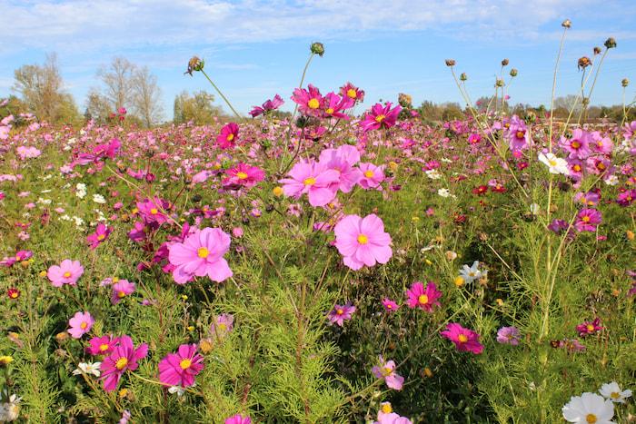Fleurs dans une prairie du Château Penin